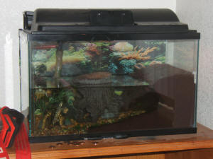 Faqs About African Dwarf Frogs Compatibility